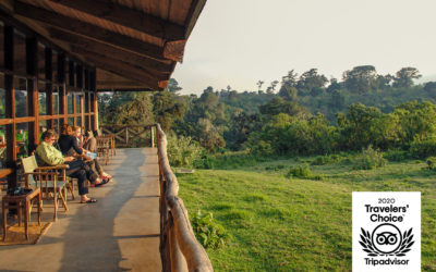 Rhino Lodge Rated As One Of The Top Properties in the 2020 Tripadvisor Travelers' Choice Awards