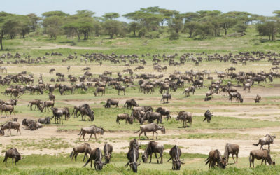 Why You Should Visit Ngorongoro Just After The Short Rains